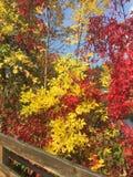Folhas 2 da queda Fotografia de Stock