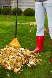 Folhas da queda com ancinho Imagens de Stock Royalty Free