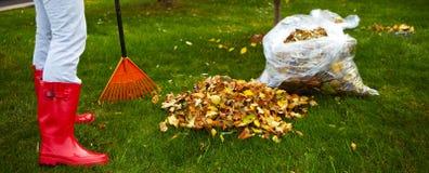 Folhas da queda com ancinho Fotografia de Stock Royalty Free