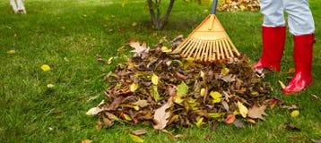 Folhas da queda com ancinho Imagens de Stock
