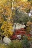 Folhas da queda da angra de Whitewater fotos de stock