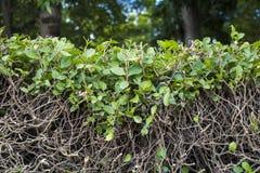 Folhas da queda da parede da árvore Imagens de Stock