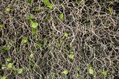 Folhas da queda da parede da árvore Imagem de Stock