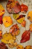 Folhas da queda dispersadas no concreto Imagem de Stock