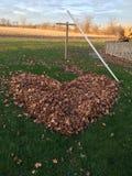 Folhas da queda do coração Fotografia de Stock Royalty Free