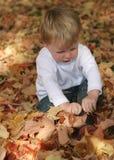 Folhas da queda do divertimento Fotos de Stock