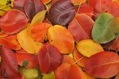 Folhas da queda do outono Imagem de Stock