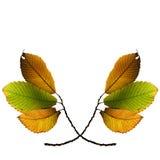 Folhas da queda do outono Imagem de Stock Royalty Free