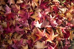 Folhas da queda do vermelho e do amarelo imagem de stock