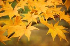 Folhas da queda em uma floresta Fotografia de Stock Royalty Free