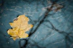 Folhas da queda na água Fotos de Stock Royalty Free