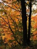 Folhas da queda na árvore na floresta imagens de stock