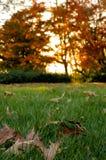 Folhas da queda na grama Fotos de Stock Royalty Free