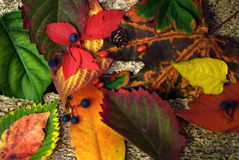 Folhas da queda na madeira da tração Imagens de Stock Royalty Free