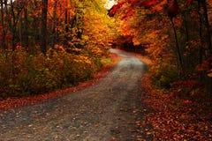 Folhas da queda na terra Imagem de Stock Royalty Free