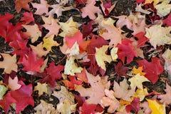 Folhas da queda na terra foto de stock