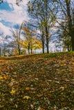 Folhas da queda na terra Imagem de Stock