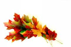 Folhas da queda no branco fotografia de stock