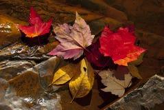 Folhas da queda no córrego Imagem de Stock