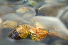 Folhas da queda no córrego Fotos de Stock