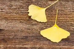 Folhas da queda no fundo de madeira Fotos de Stock Royalty Free