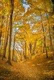 Folhas da queda no ninho dos abibes, Baraboo, Wisconsin, EUA Imagens de Stock