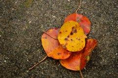 Folhas da queda no passeio concreto molhado Foto de Stock