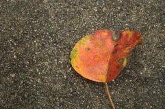 Folhas da queda no passeio concreto molhado Imagem de Stock Royalty Free