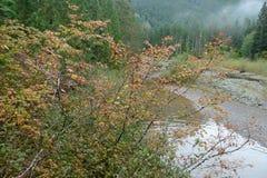 Folhas da queda pelo River Valley Fotografia de Stock Royalty Free