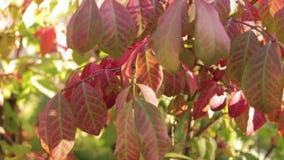 Folhas da queda que balançam em um leve vento vídeos de arquivo