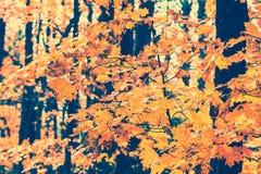 Folhas da queda - vintage Imagens de Stock