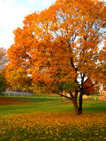 Folhas da queda, Virgínia Imagem de Stock Royalty Free