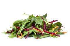 Folhas da salada imagens de stock