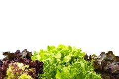 Folhas da salada com copyspace Fotografia de Stock Royalty Free