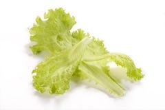 Folhas da salada no branco Fotos de Stock Royalty Free