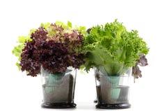 Folhas da salada no vidro no fundo branco Imagem de Stock Royalty Free