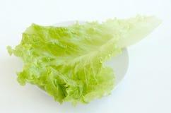 Folhas da salada verde Fotos de Stock