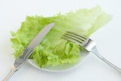 Folhas da salada verde Fotos de Stock Royalty Free