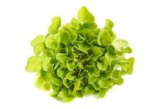 Folhas da salada verde no branco Fotografia de Stock