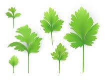 Folhas da salsa Ilustração Stock