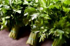 Folhas da salsa Fotos de Stock