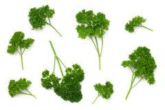 Folhas da salsa isoladas no fundo branco Imagens de Stock Royalty Free