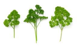 Folhas da salsa isoladas no fundo branco Fotos de Stock
