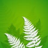 Folhas da samambaia do Livro Branco no fundo verde Imagens de Stock Royalty Free