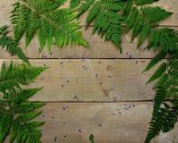 Folhas da samambaia em um fundo de madeira Fotografia de Stock Royalty Free