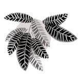 Folhas da selva 2 Fotografia de Stock Royalty Free