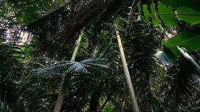 Folhas da selva que fluem no vento video estoque