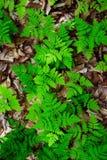 Folhas da textura Foto de Stock