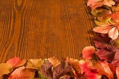 Folhas da trepadeira do arvoredo Imagens de Stock
