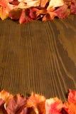 Folhas da trepadeira do arvoredo Fotos de Stock Royalty Free
